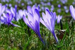 parco_nazionale_pollino_basilicata_calabria_flora_fiori